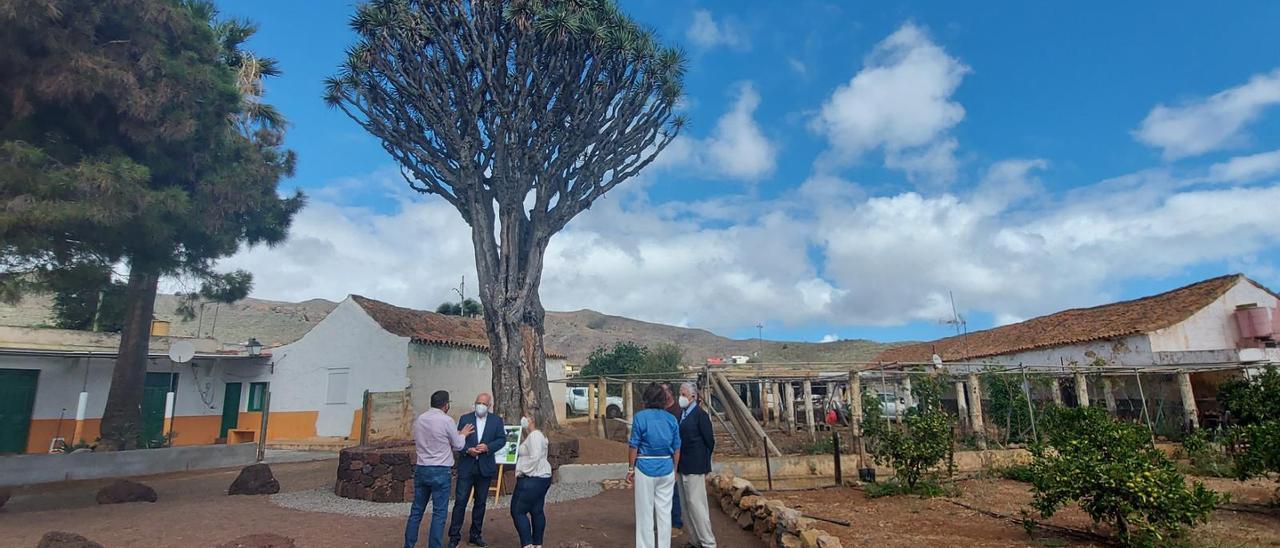 Drago centenario de Luis Verde, en el municipio de Valsequillo