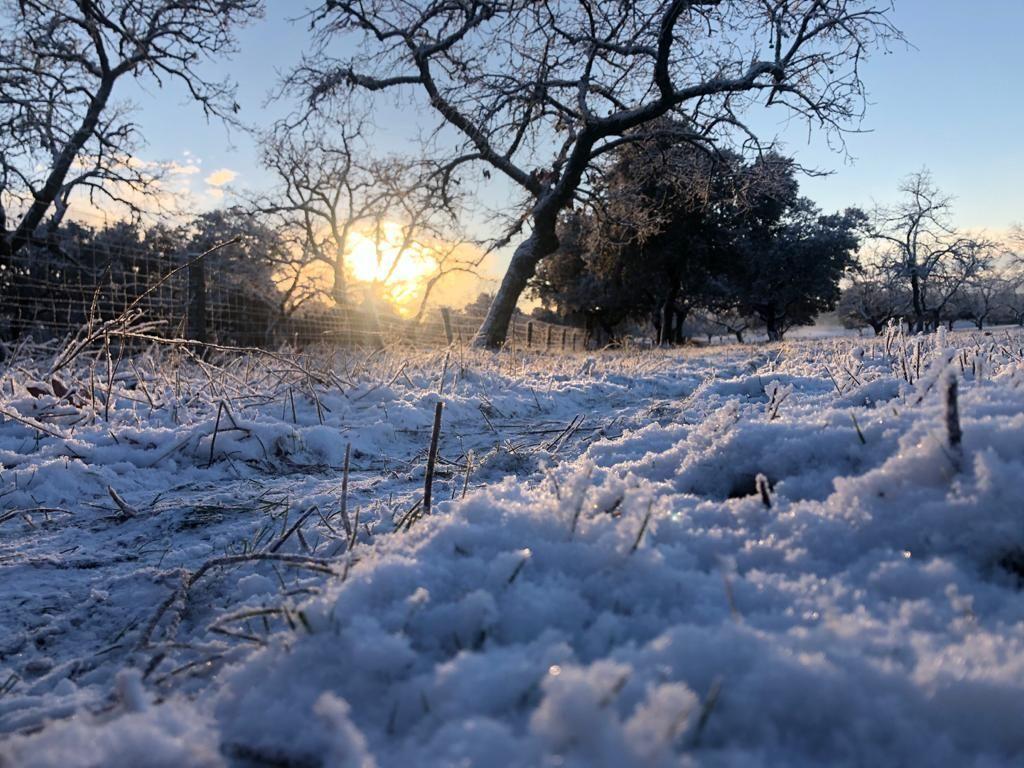 Amanecen nevadas zonas de Los Pedroches y la Subbética