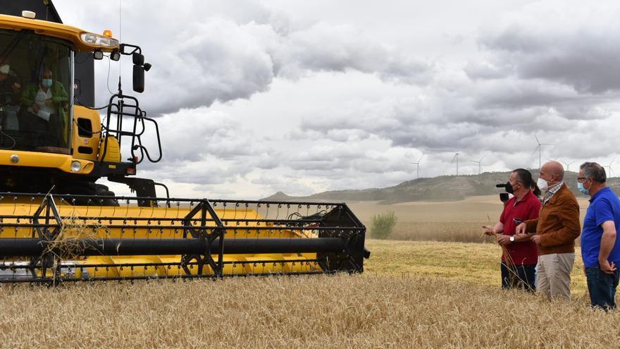 El rendimento medio de la cosecha en Zamora: 3.143 kilos por hectárea