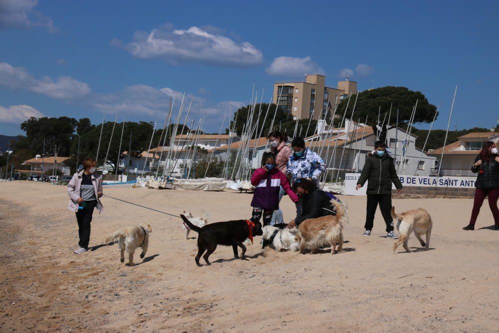 Veïns de Palamós reclamen a l'Ajuntament una platja adequada per a les mascotes