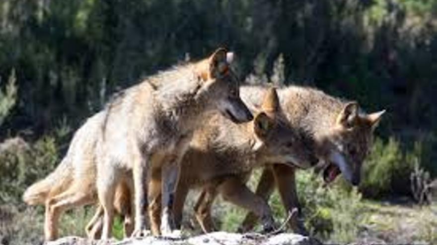 Proteger la fauna salvaje sin desproteger a la población rural