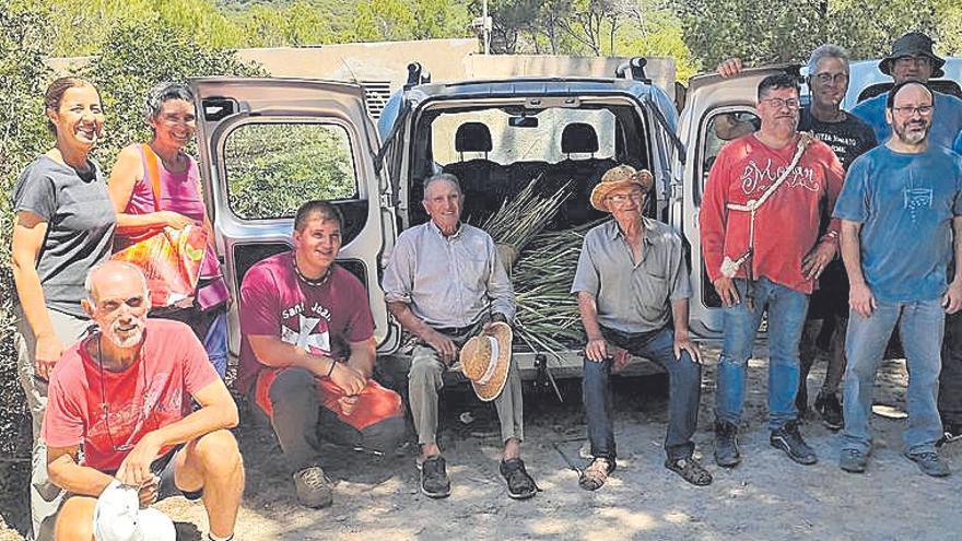 Capdepera ha recolectado 100 kilos de palmito para las 'Madones de la llata'