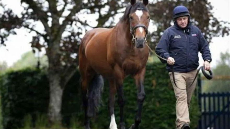 Muere Galileo, el caballo semental purasangre que cobraba 600.000 euros por coito