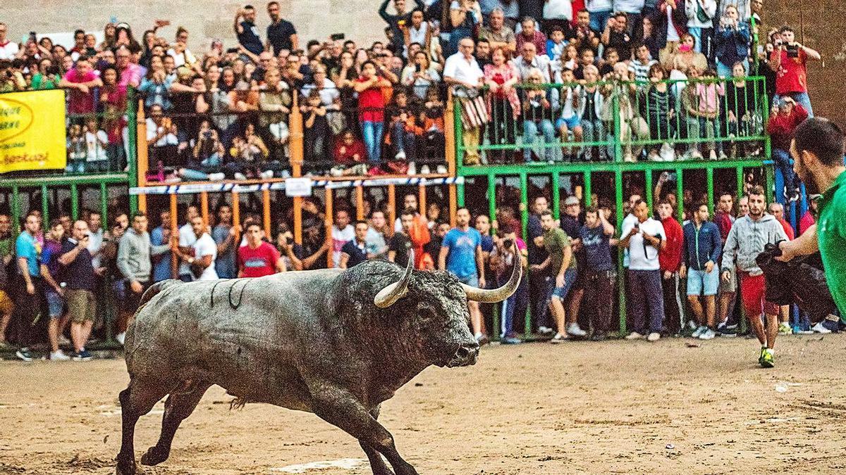 Burriana tendrá toros en las fiestas de la Misericòrdia, pero no podrá revivir la avalancha de público de 'Nubarrón'.  | JORDI JUÁREZ