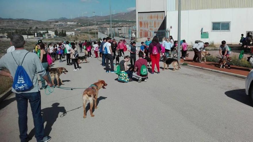 Jornada de solidaridad con los animales en Jumilla