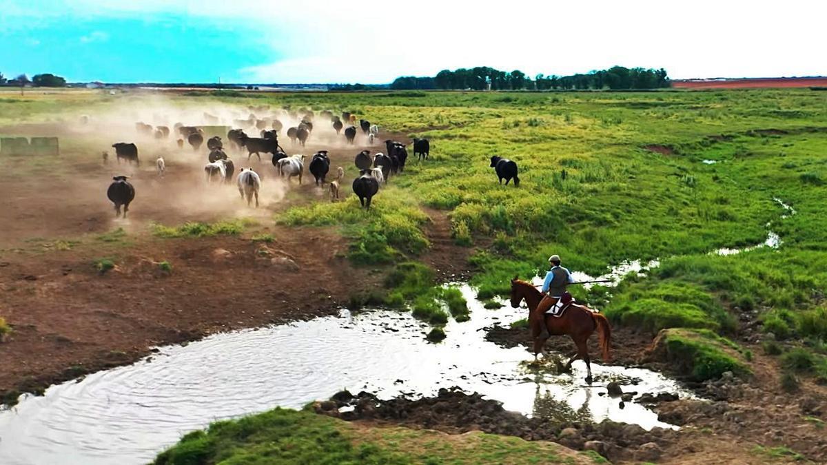 Imagen de una vaquería que aparece en la película. | Cobadu