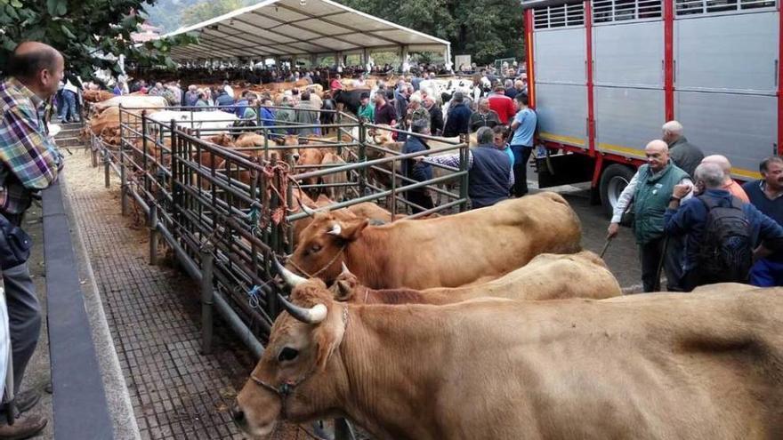 Los ganaderos piden un recinto amplio para la feria de Santa Teresa en Infiesto