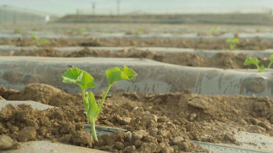 Las 17 medidas propuestas por el sector para una agricultura sostenible
