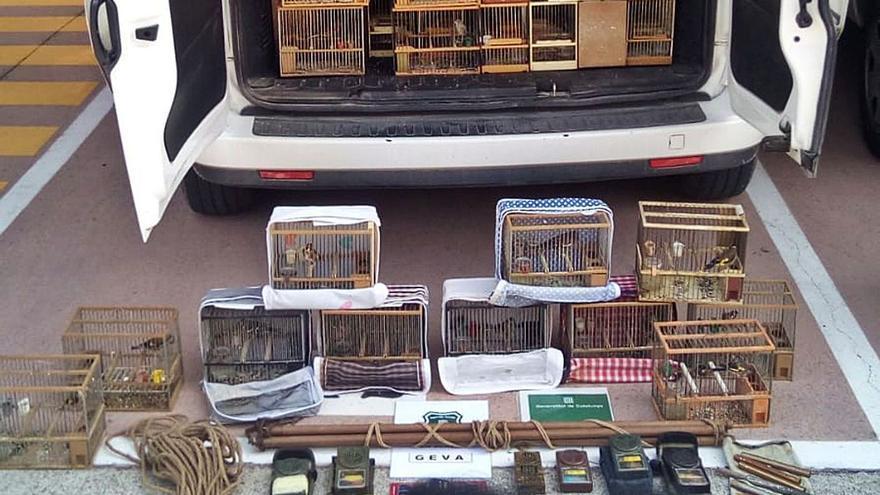 Intervenen 62 ocells d'espècies protegides a Olot