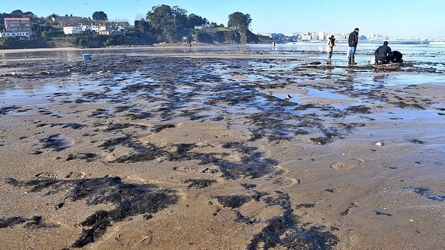 Vidal Romaní afirma que en Bastiagueiro ha aparecido un bosque fósil de miles de años