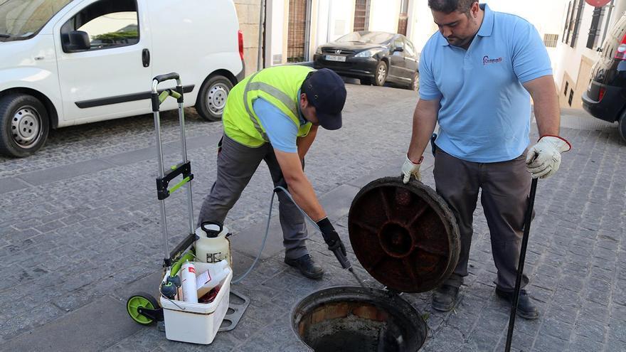 Nueva campaña de  desratización en la red de alcantarillado de Montilla