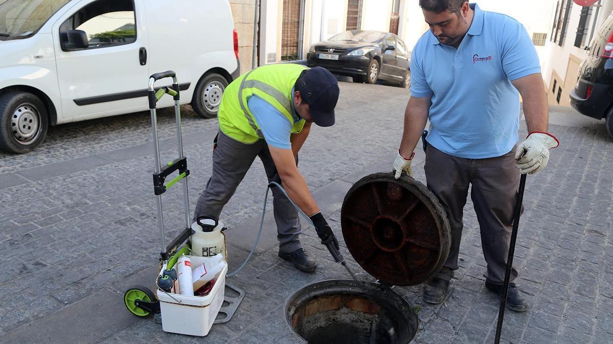 Dos operarios aplican un insecticida en una alcantarilla de la calle Iglesia, junto a la parroquia de Santiago.