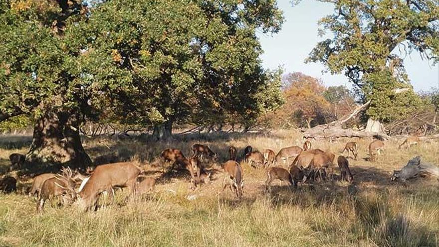 Un día en el parque de los ciervos