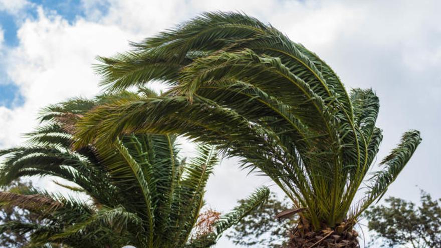 Tenerife en alerta por vientos que pueden llegar a 130 km/hora en el Teide
