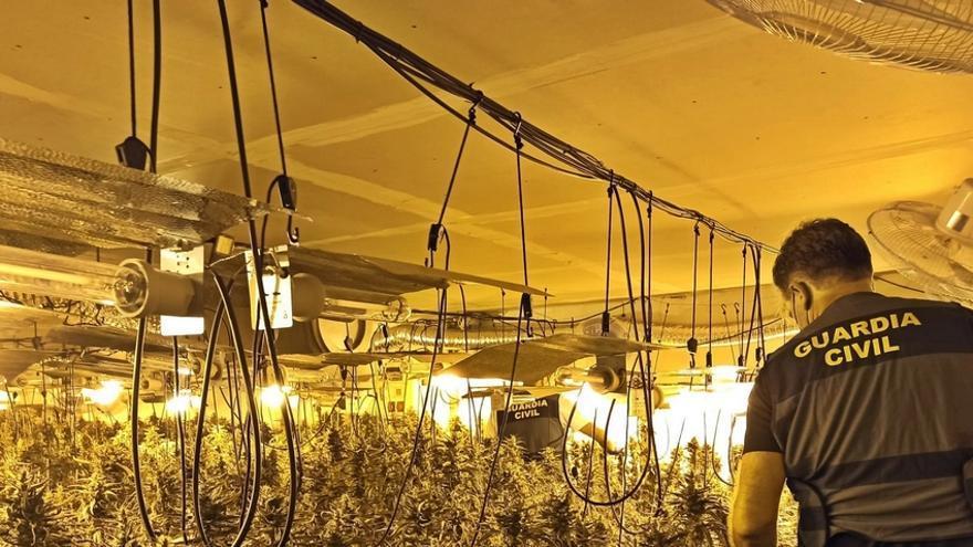 La Guardia Civil desmantela dos plantaciones de marihuana en Orellana de la Sierra