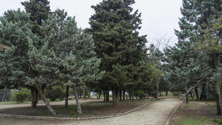 Manresa rebrà un tractament contra la processionària dels pins i cedres