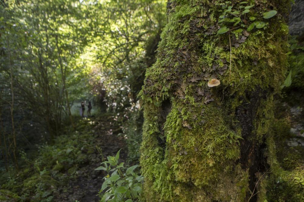 Las rutas de Asturias: las foces del río Pendón
