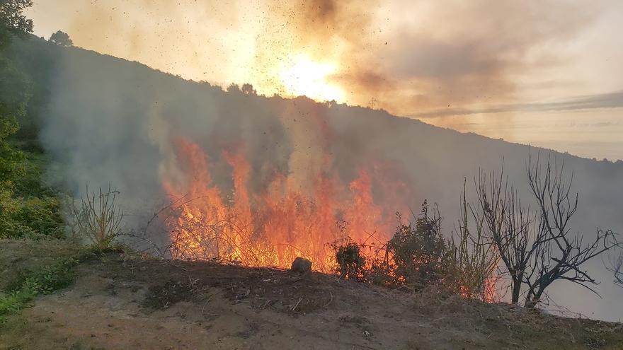 Un fuego quema 600 metros cuadrados de cultivos y helechos en Icod de los Vinos