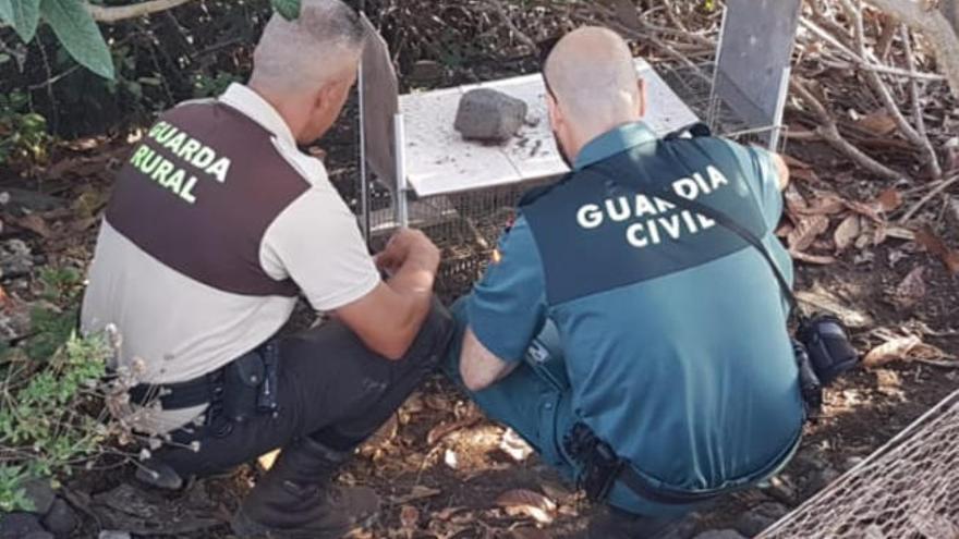 Investigan a un hombre en La Palma por matar a su perro a golpes