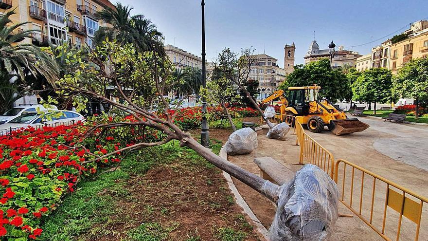 Plantación masiva de 1.300 árboles en 13 distritos