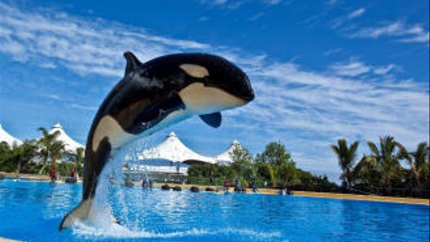 Loro Parque continúa con las actuaciones de animales y las retransmite en sus redes sociales