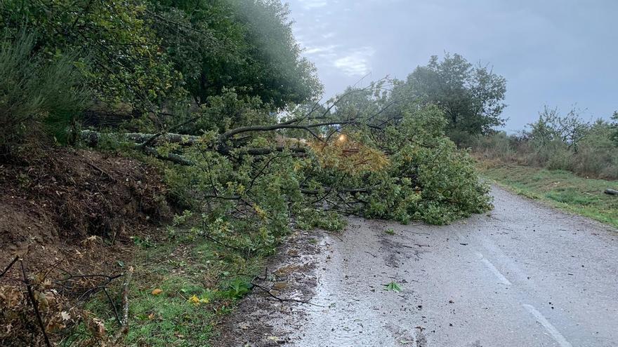 Los árboles caídos por la ciclogénesis en Sanabria cortan la vía que comunica Trefacio con Pedrazales