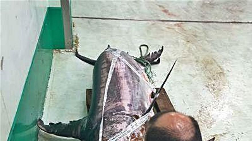 La Guardia Civil decomisa en el Puerto un pez espada de 245 kilos de peso