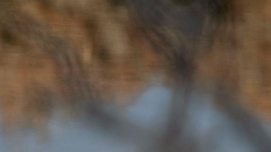 Aves anónimas de ses Salines