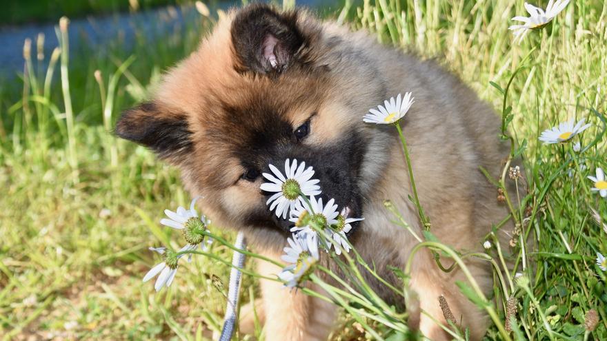 ¿Tienes perros o gatos? Cuidado con estas plantas