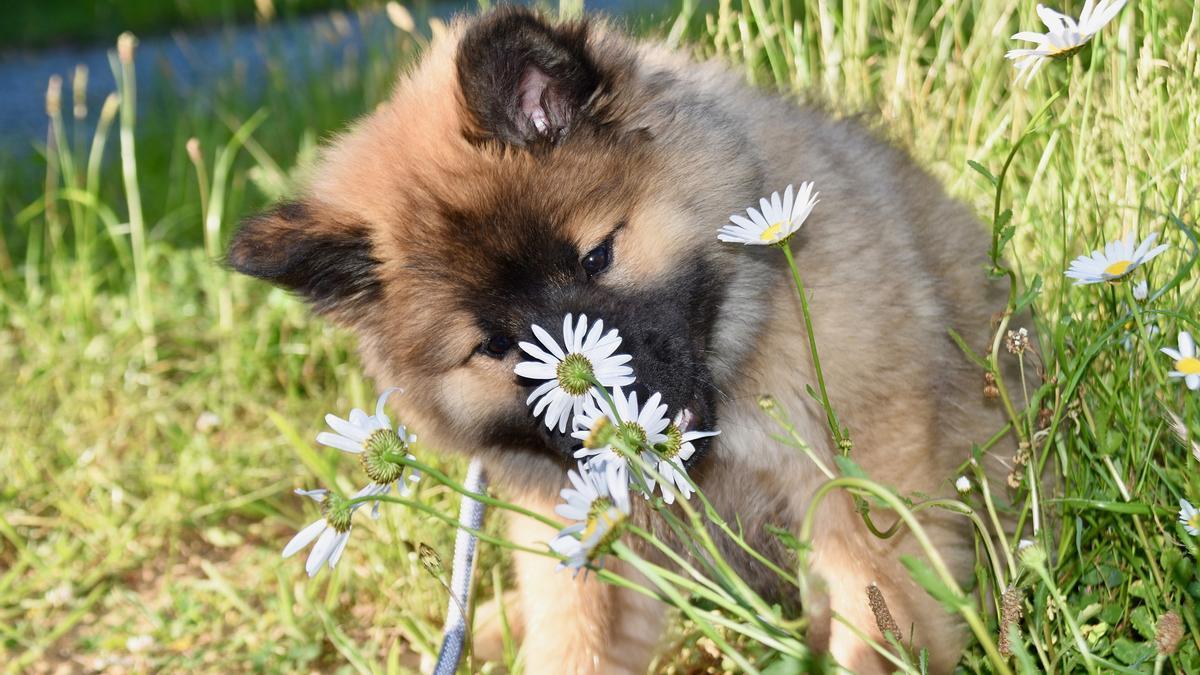 Perro jugando con una flor