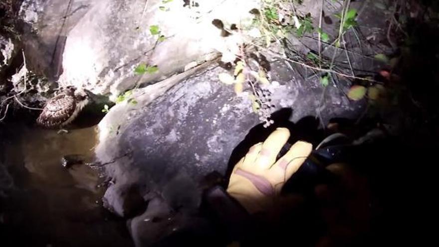 Los bomberos rescatan un águila pescadora con hipotermia en la zona de la Cova Negra