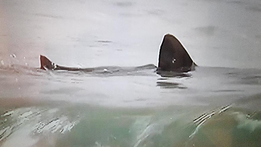 Un tiburón en la playa