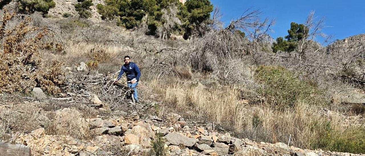El edil de Medio Ambiente, Dámaso Aparicio, ayer, con árboles secos no retirados en la sierra.