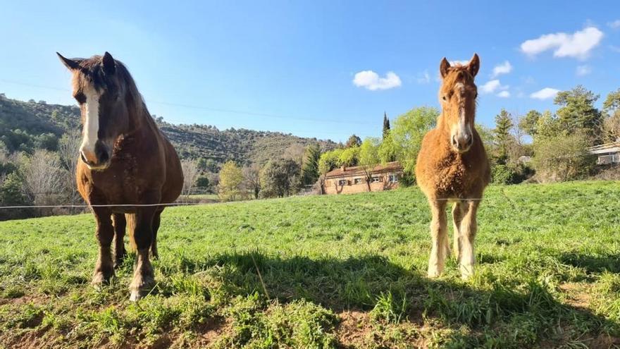 Una recerca internacional situa la domesticació del cavall modern fa 4.200 anys al nord del Caucas