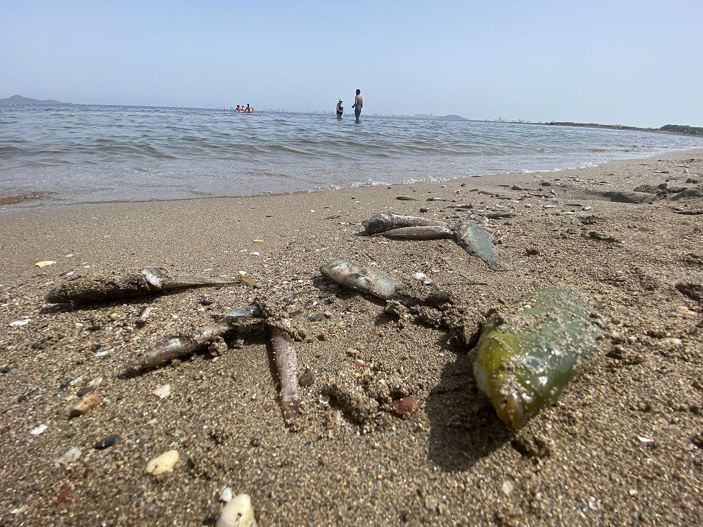 Así han amanecido las playas del Mar Menor