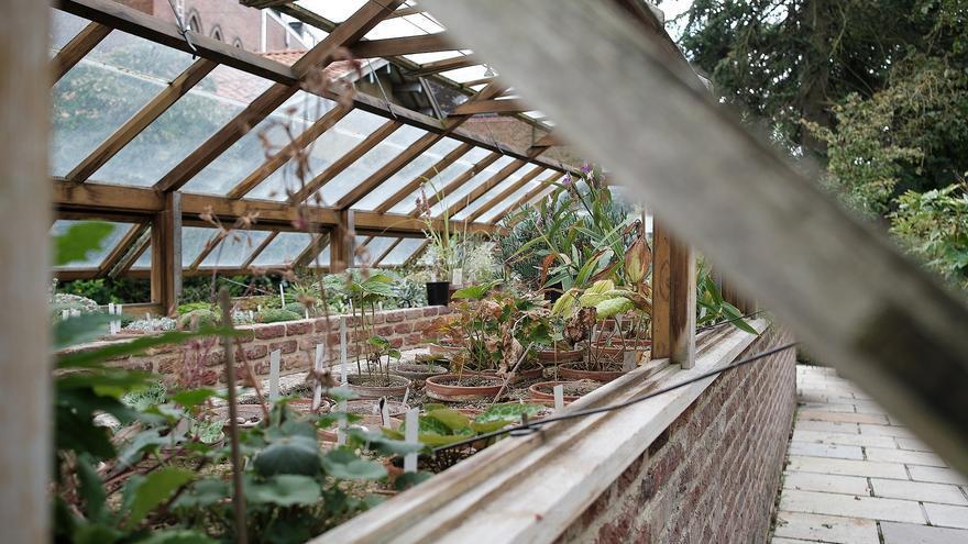 Cinco ideas para integrar las plantas en tu hogar