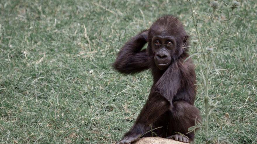 Los animales también guardan distancia social para evitar contagios