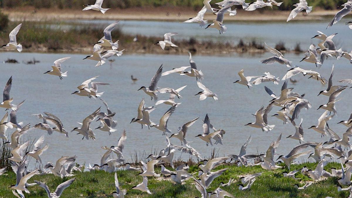 Un grupo de aves vuela sobre el Racó de l' Olla.   LEVANTE-EMV