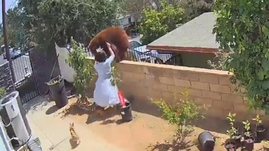 Una joven empuja a un oso para defender a sus perros