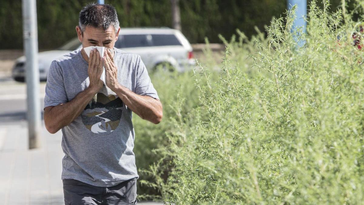 La alergia al polen puede resultar menos agresiva este año.