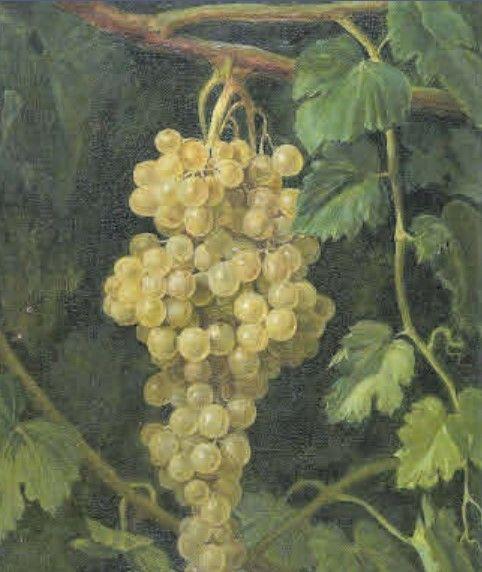 Racimo de uvas, de Joaquina Serrano.