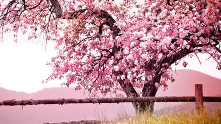 La primavera será calurosa y menos lluviosa de lo normal