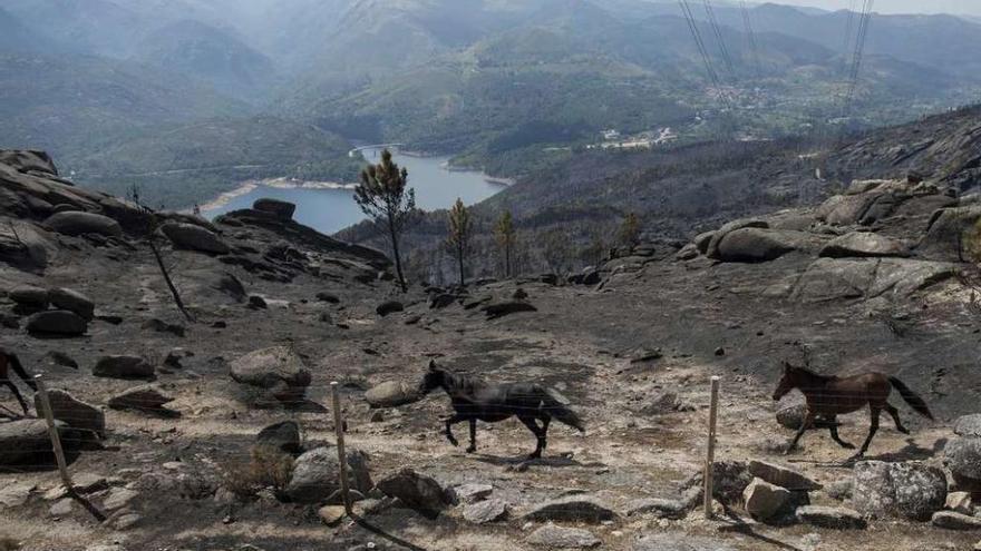 El fuego de Entrimo sigue activo y es ya el más devastador del año: 2.800 hectáreas
