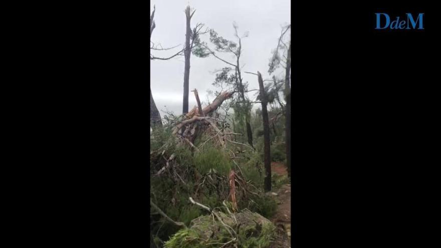 """Testigos del 'cap de fibló' de Banyalbufar: """"El viento no arrancaba los árboles, los partía"""""""