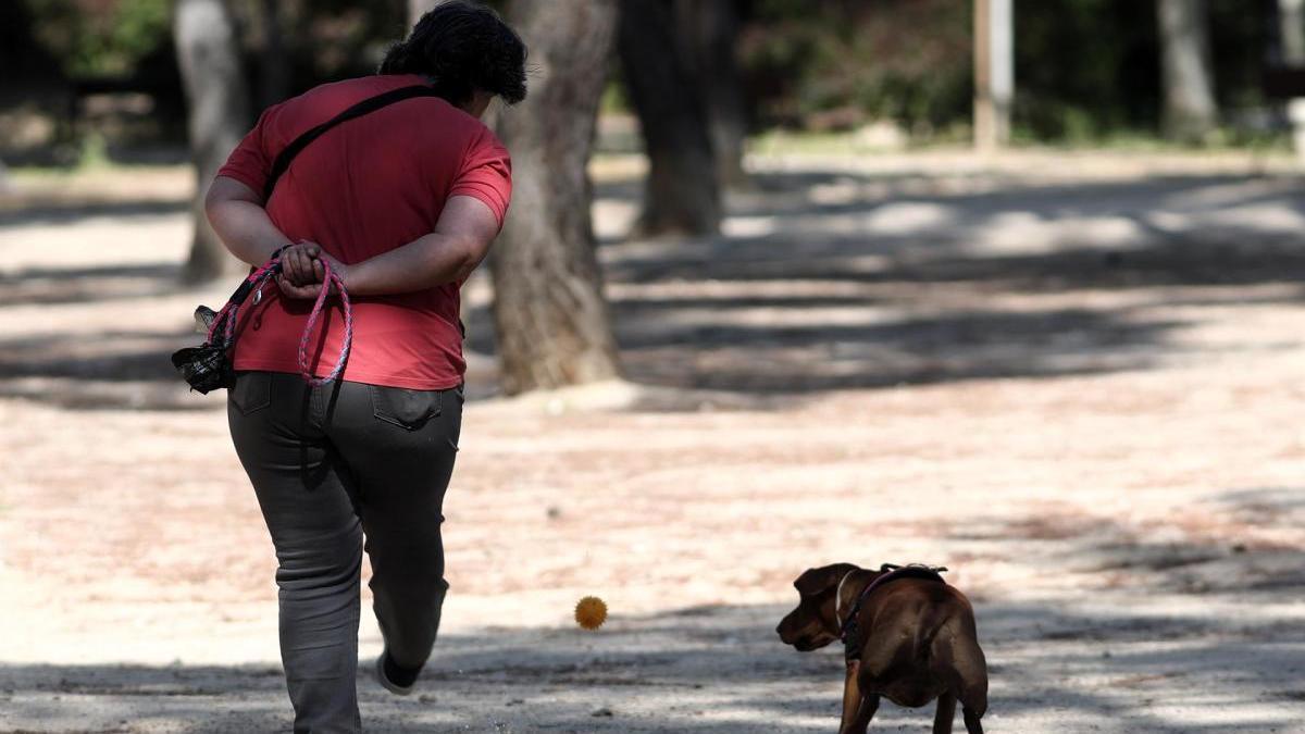 Una mujer pasea a su perro en Madrid.
