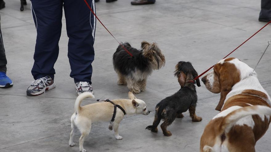 Los veterinarios piden que se pueda sacar a pasear a las mascotas en el toque de queda en Zamora