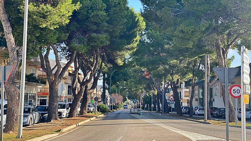 Casi 40 pinos de una avenida de Artà se sustituirán por riesgo de caída
