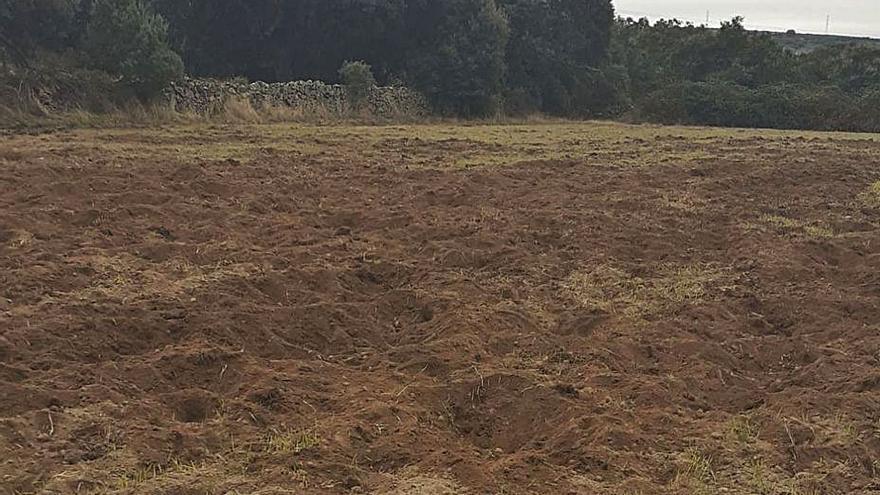 Ganaderos de Sayago denuncian graves daños del jabalí en los cultivos
