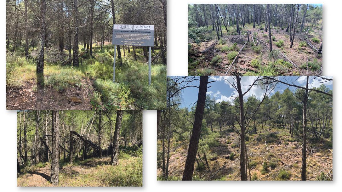 """Torás alerta de un """"polvorín"""" para el fuego por pinos caídos hace 3 años"""