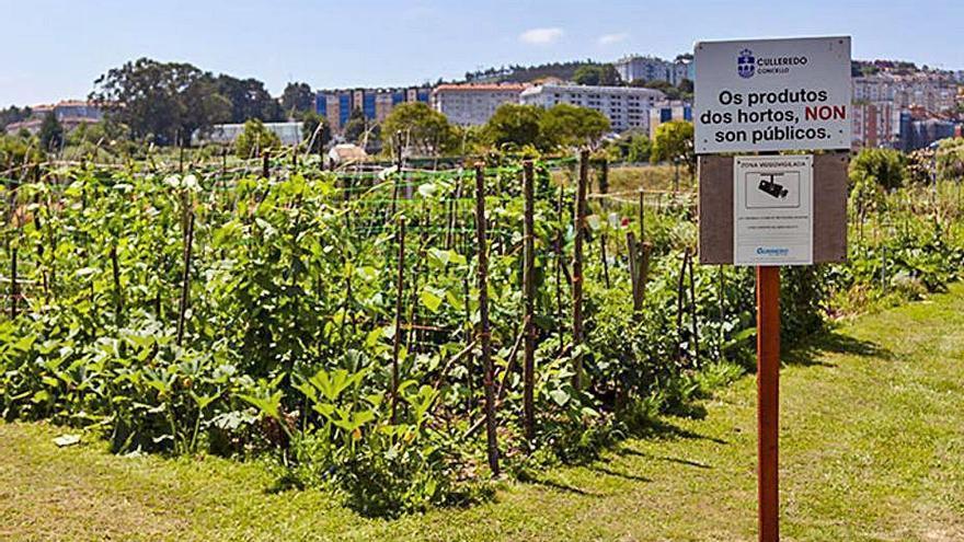 Culleredo pone en marcha el plan de formación de horticultura ecológica